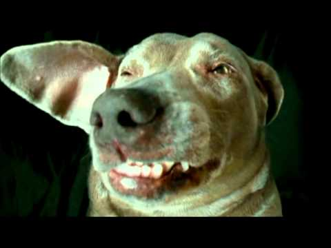 Funny Dogs Videos Best of Super Britney the worlds funniest talking Dog