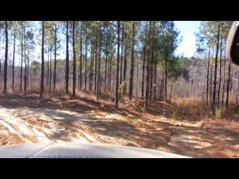146 Acres, Cleburne County, Alabama