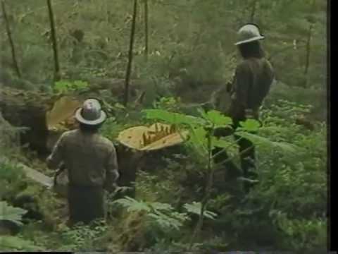Valentine Logging - Coffman Cove Alaska - 1983