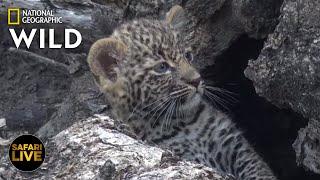 Safari Live - Day 270   Nat Geo Wild by Nat Geo WILD