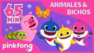 Las Mejores Canciones de Animales  Bichos  Recopilación  Pinkfong Canciones Infantiles
