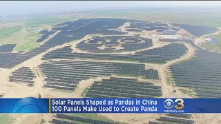 Exactly 100 panels were used to create the panda.