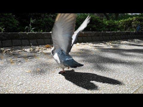 【動物愛護とは】片足を失った鳩を見て、命を考えてみる