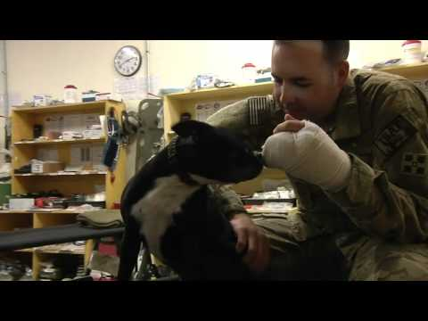 0 Military Dog Picture of the Week. (July 4th, 2012): Therapy Dogs