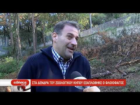 Στα δέντρα του ζωολογικού κήπου εξαπλώθηκε ο Φλοιοφάγος | 05/11/2019 | ΕΡΤ