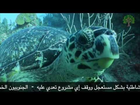 أنقذوا السلاحف البحرية الآن
