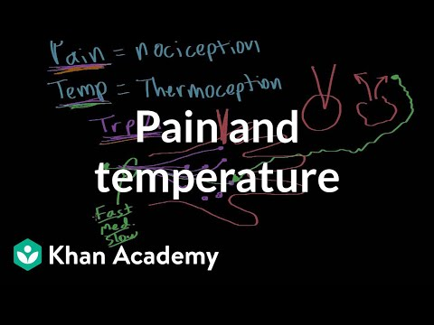 Pain and temperature (video) | Khan Academy