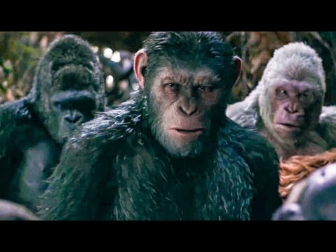 I Did Not Start This War Scene - WAR FOR THE PLANET OF THE APES (2017) Movie Clip