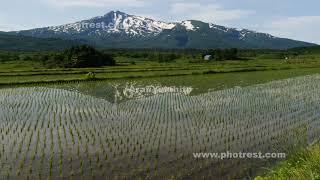 夏の鳥海山