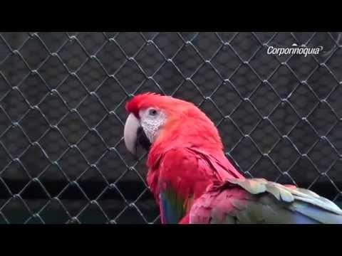 Liberación de animales en la reserva natural de la sociedad civil Venecia de Guanapalo