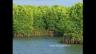 Kumarakom India  city photos gallery : Kumarakom Responsible Tourism initiatives