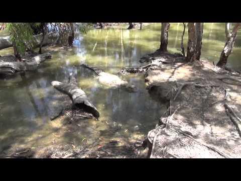 Parque dos crocodilos: primeira parte.