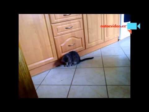 Kočička si hraje