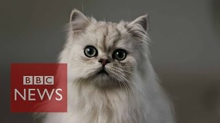 What's it like being a cat? BBC News