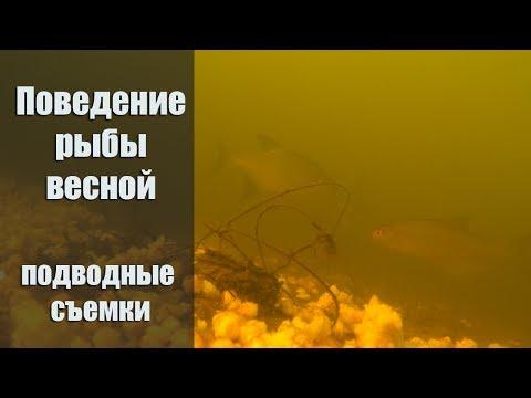 подводная съемка рыбалки на фидер