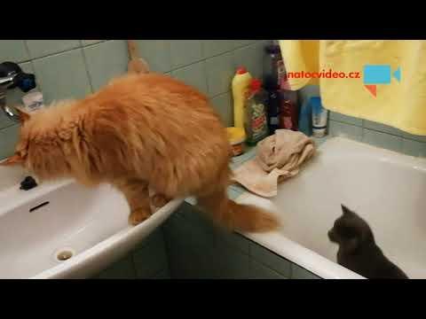 Ráno začíná v koupelně