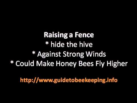 Bakyard Beekeeping – 2 Tips For Backyard Beekeeping