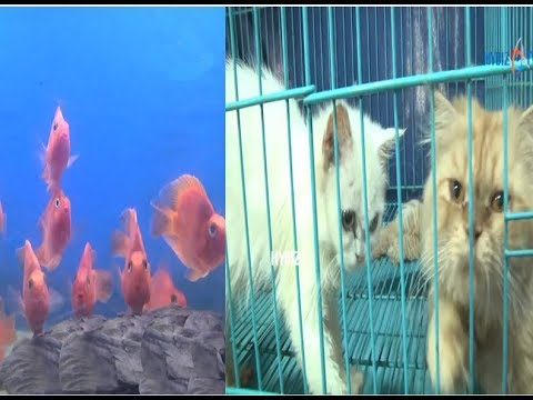 Pacific Aquarium and Pets