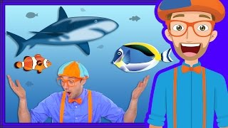 Blippi takes you inside the aquarium. Learn about fish with Blippi. See above the tanks and feed fish, sharks, stingrays and more with Blippi. This is a great video about fish for kids. Watch and subscribe to more Blippi videos at https://youtube.com/Blippi?sub_confirmation=1Watch all Blippi videos athttps://www.youtube.com/watch?v=iOtX7GRzCfE&list=PLzgk_uTg08P-UbUdr1x0gPdC5tVAixw8_Special thanks to the Florida Aquarium