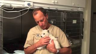 IV Fluids In Dogs and Cats for Support During Surgery, Injury, and Illness