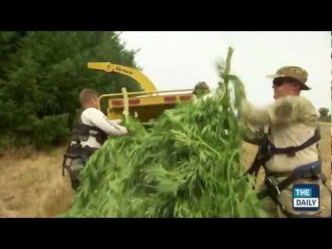 California Pot Bust (REAL FOOTAGE!)