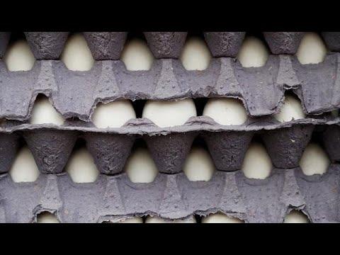 Χειμερινοί Ολυμπιακοί Αγώνες: 15000 αυγά παρήγγειλαν οι Νορβηγοί