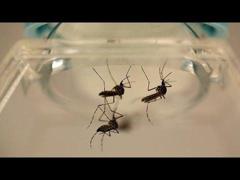 ΗΠΑ: Ανησυχία για εξάπλωση του ιού Ζίκα στο Πουέρτο Ρίκο