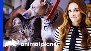 Pet Experts Think It's Unsafe To Integrate These Pets | Cat vs. Dog by Animal Planet