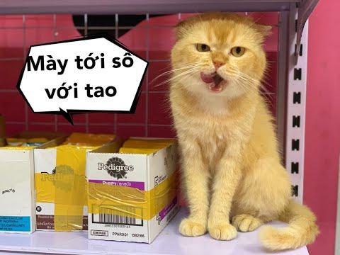 Gặp lại Mèo Mon Ú Nu , Mật gây chuyện đánh nhau tóe loe Mật Pet Family - Thời lượng: 5 phút, 56 giây.