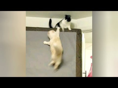 Funny animals - It's time for you to LAUGH! Watch FUNNIEST ANIMALS HERE!