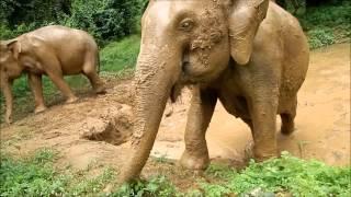 Sai Yok (Kanchanaburi) Thailand  City pictures : Elephant Haven Sai Yok, Kanchanaburi , Thailand