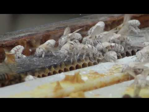 Honey Bee Apiary Official inspection by the PA Dept  of Agriculture