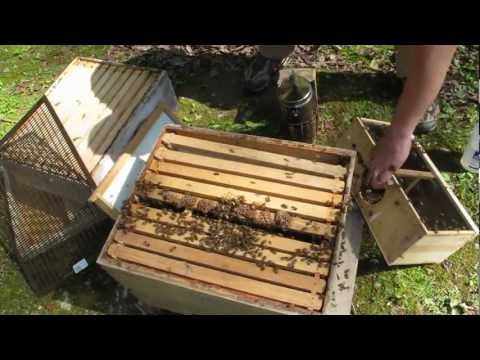 How to install a Package of Bees, Bee Keeping 101