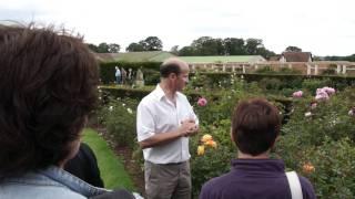 #488 David Austin Roses 2011 - Der Wert des Rosennamens Mortimer Sackler