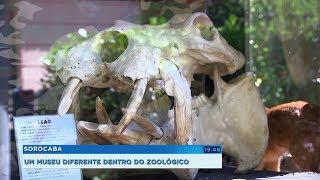 Museu de Zoologia em Sorocaba é opção de lazer e aprendizado durante as férias