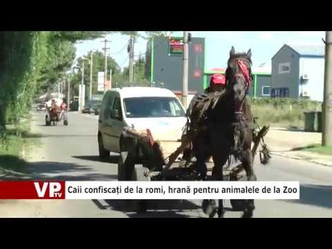 Caii confiscați de la romi, hrană pentru animalele de la Zoo