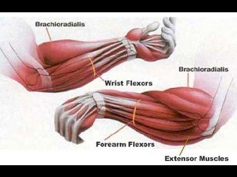 comment renforcer ses poignets
