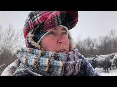 Saskatchewan blizzard
