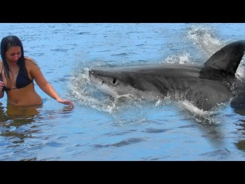 Shark Attack teen girl caught on video – Robe, Australia July 30, 2011