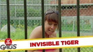 Phát hiện giống hổ mới - Hổ vô hình