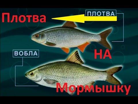 диалоги о рыбалке видео красноперка