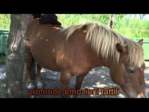 video commovente sulla relazione di amore e stima tra uomo e cavallo