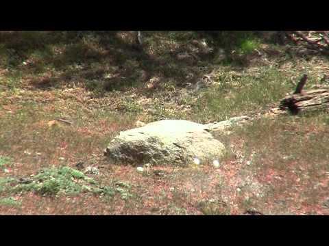 0 Видео стрельбы из Crosman Benjamin Discovery