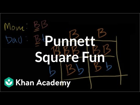 squares - Learn more: http://www.khanacademy.org/video?v=D5ymMYcLtv0 Dihybrid crosses. Independent assortment. Incomplete dominance. Codominance and multiple alleles.