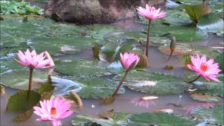 A Beautiful Buddhist Crystal MUSIC For Meditation .....Qigong . Yoga , Spa ,&TaiChi !