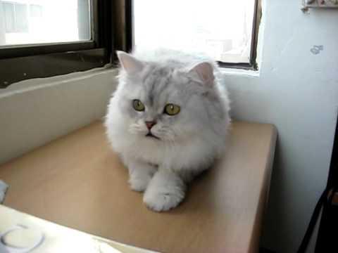 貓咪不停的發出怪聲,到底真相是…?