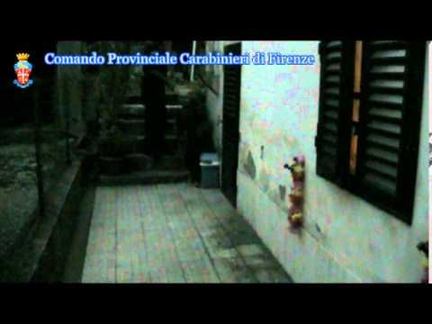 Video operazione con il reparto cinofili