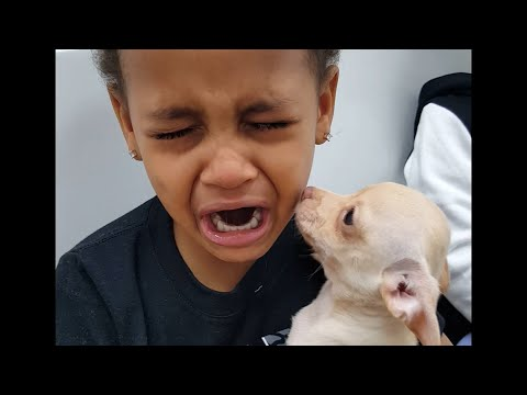 Watch This Little Boy Cry Over How Cute His New Puppy Is