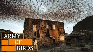 Video When Birds Defend KAABA (House of GOD) || Story of Ababil Birds and The Elephant MP3, 3GP, MP4, WEBM, AVI, FLV Maret 2019