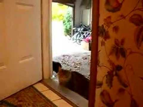 Cat Opens Door